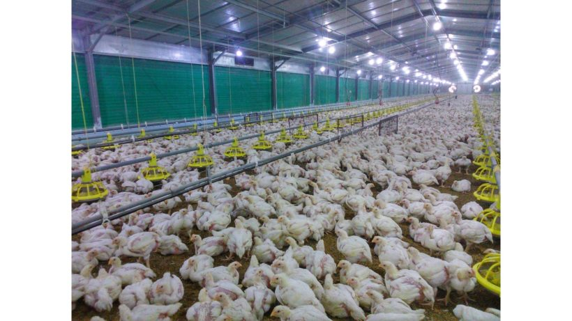Facility Design of Low Energy and High Performance Poultry Sheds